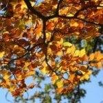 Fall Minimalism