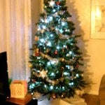 Christmas Trees in my House