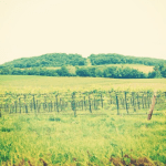 Happy Memorial Day and $1,582 in Extra Income