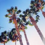 Utah, Nevada, and California Road Trip Recap