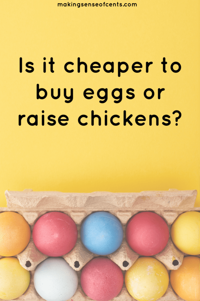 raising backyard chickens for eggs