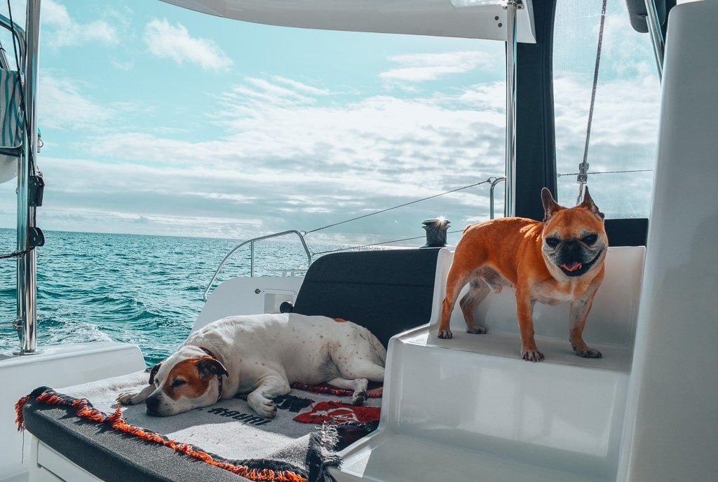 full-time travel with dogs